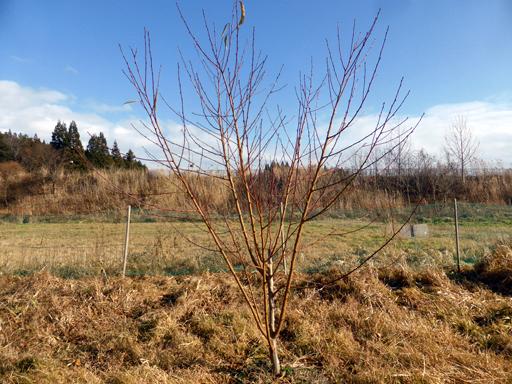 大豆と小豆の収穫、冬に向かう畑_d0366590_19451526.jpg