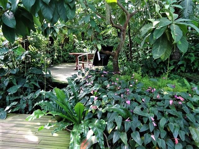 高知県立牧野植物園に魅せられて牧野富太郎博士の業績にビックリ、素晴らしい植物園には沢山の花々が、ノジギクの命名者は牧野富太郎先生がその人_d0181492_20450116.jpg