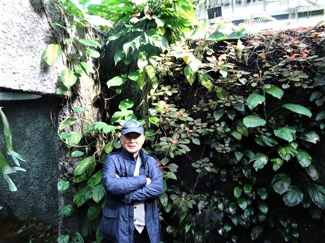 高知県立牧野植物園に魅せられて牧野富太郎博士の業績にビックリ、素晴らしい植物園には沢山の花々が、ノジギクの命名者は牧野富太郎先生がその人_d0181492_20451266.jpg