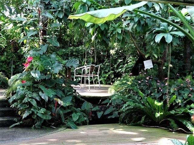 高知県立牧野植物園に魅せられて牧野富太郎博士の業績にビックリ、素晴らしい植物園には沢山の花々が、ノジギクの命名者は牧野富太郎先生がその人_d0181492_20452379.jpg