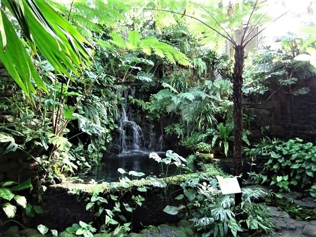 高知県立牧野植物園に魅せられて牧野富太郎博士の業績にビックリ、素晴らしい植物園には沢山の花々が、ノジギクの命名者は牧野富太郎先生がその人_d0181492_20454406.jpg