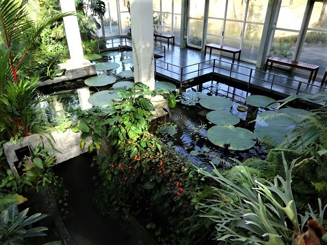 高知県立牧野植物園に魅せられて牧野富太郎博士の業績にビックリ、素晴らしい植物園には沢山の花々が、ノジギクの命名者は牧野富太郎先生がその人_d0181492_20460988.jpg