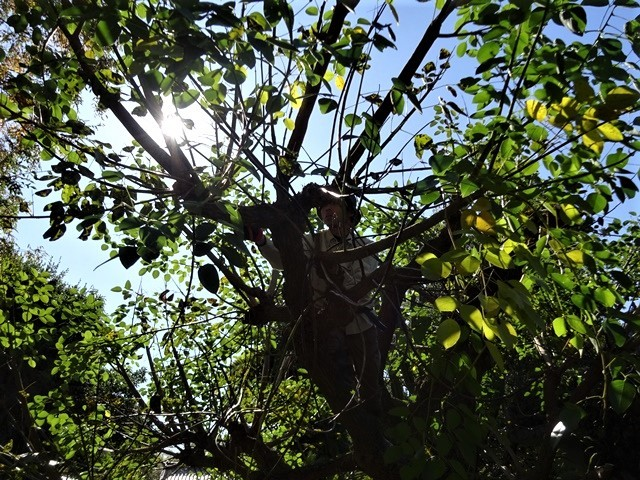 高知県立牧野植物園に魅せられて牧野富太郎博士の業績にビックリ、素晴らしい植物園には沢山の花々が、ノジギクの命名者は牧野富太郎先生がその人_d0181492_20482058.jpg