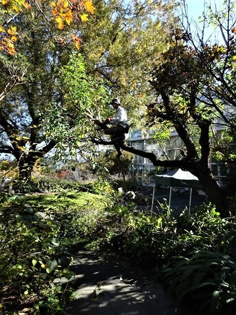 高知県立牧野植物園に魅せられて牧野富太郎博士の業績にビックリ、素晴らしい植物園には沢山の花々が、ノジギクの命名者は牧野富太郎先生がその人_d0181492_20484098.jpg