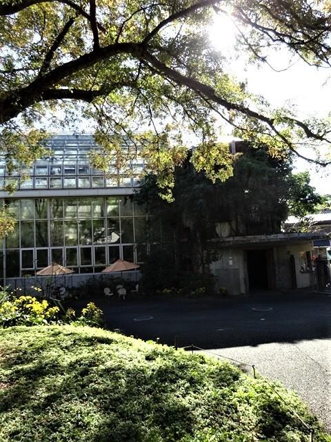 高知県立牧野植物園に魅せられて牧野富太郎博士の業績にビックリ、素晴らしい植物園には沢山の花々が、ノジギクの命名者は牧野富太郎先生がその人_d0181492_20485110.jpg
