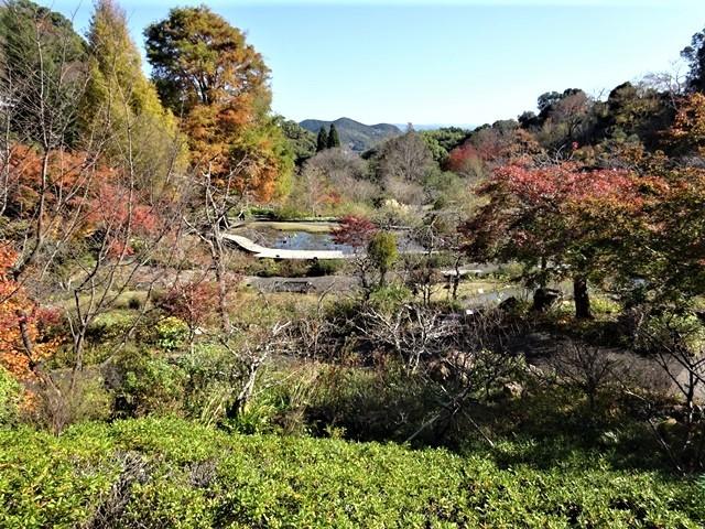 高知県立牧野植物園に魅せられて牧野富太郎博士の業績にビックリ、素晴らしい植物園には沢山の花々が、ノジギクの命名者は牧野富太郎先生がその人_d0181492_20490610.jpg