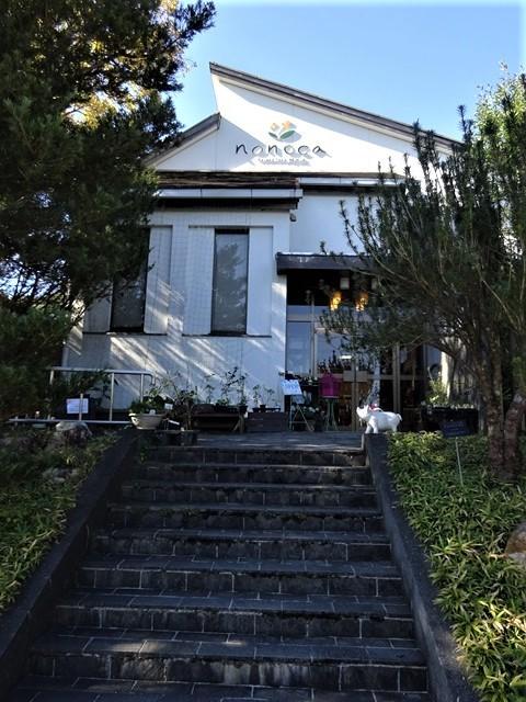 高知県立牧野植物園に魅せられて牧野富太郎博士の業績にビックリ、素晴らしい植物園には沢山の花々が、ノジギクの命名者は牧野富太郎先生がその人_d0181492_20491585.jpg