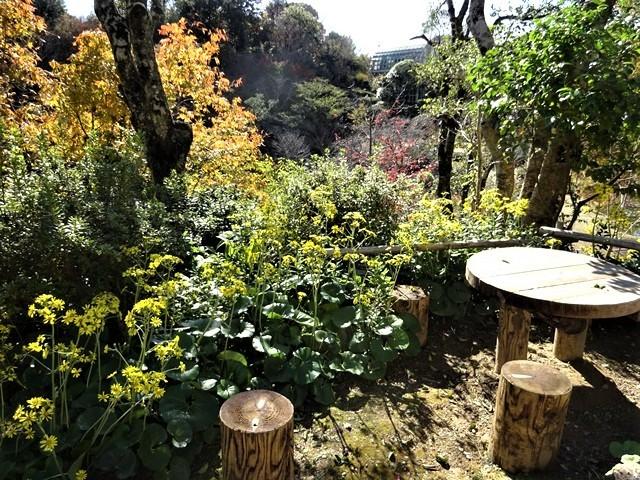 高知県立牧野植物園に魅せられて牧野富太郎博士の業績にビックリ、素晴らしい植物園には沢山の花々が、ノジギクの命名者は牧野富太郎先生がその人_d0181492_20495555.jpg
