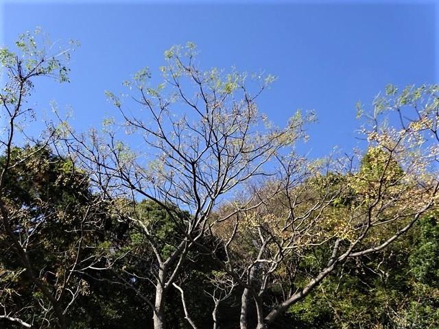 高知県立牧野植物園に魅せられて牧野富太郎博士の業績にビックリ、素晴らしい植物園には沢山の花々が、ノジギクの命名者は牧野富太郎先生がその人_d0181492_20545720.jpg