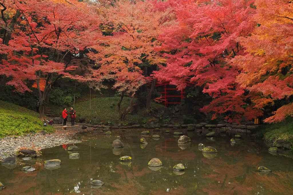 小石川後楽園の紅葉_e0348392_18401425.jpg