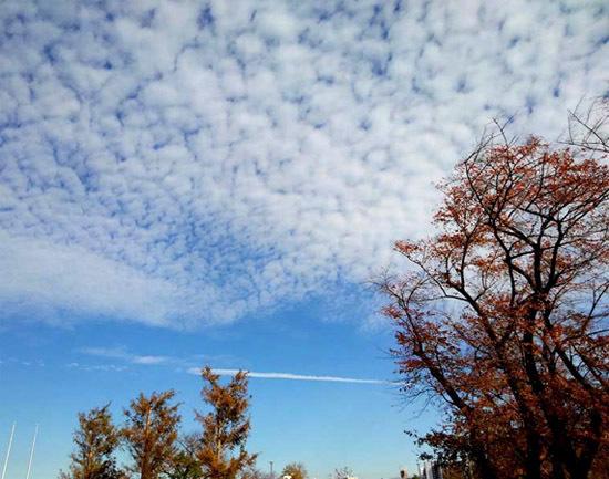 白い雲と最後の紅葉と_b0255303_16034780.jpg