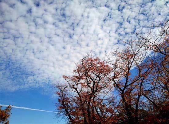 白い雲と最後の紅葉と_b0255303_16040871.jpg
