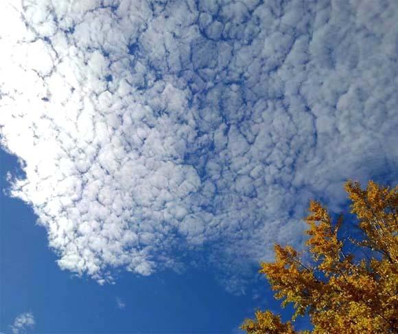 白い雲と最後の紅葉と_b0255303_16042398.jpg