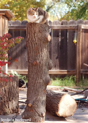 お転婆Sandy(2012年10月)_b0253205_02224012.jpg