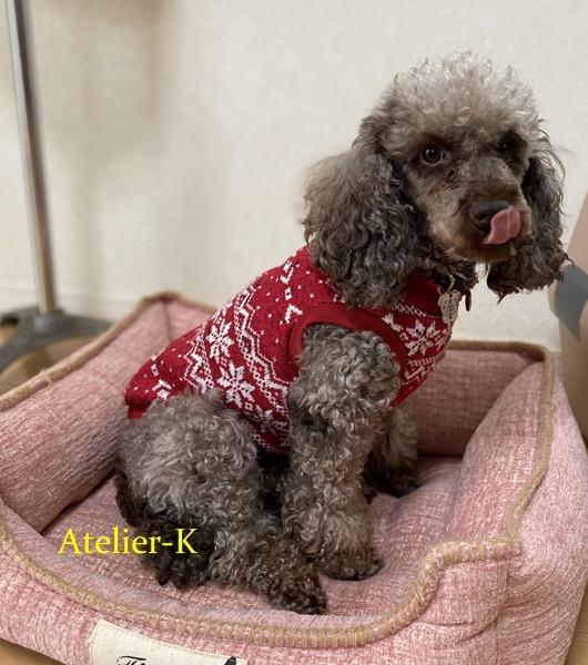 犬の冬服を作りました♪_c0319009_11552200.jpg