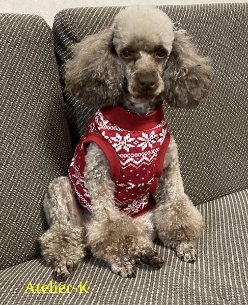 犬の冬服を作りました♪_c0319009_12032195.jpg