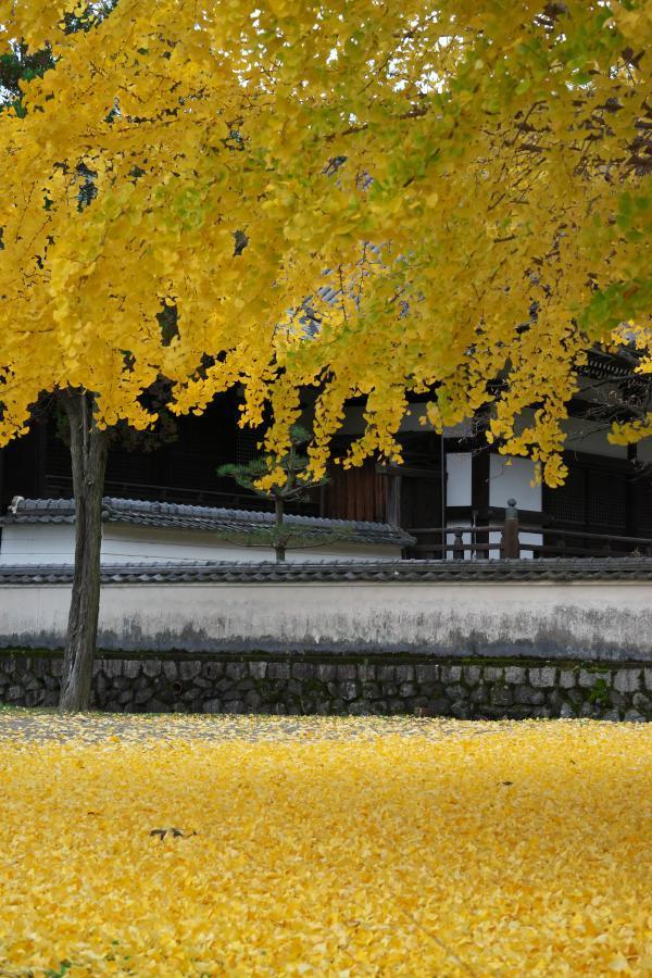 明日香・橘寺の銀杏_b0408917_18574876.jpg