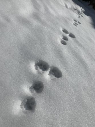 ウサギの足あと。_f0101226_19420533.jpeg