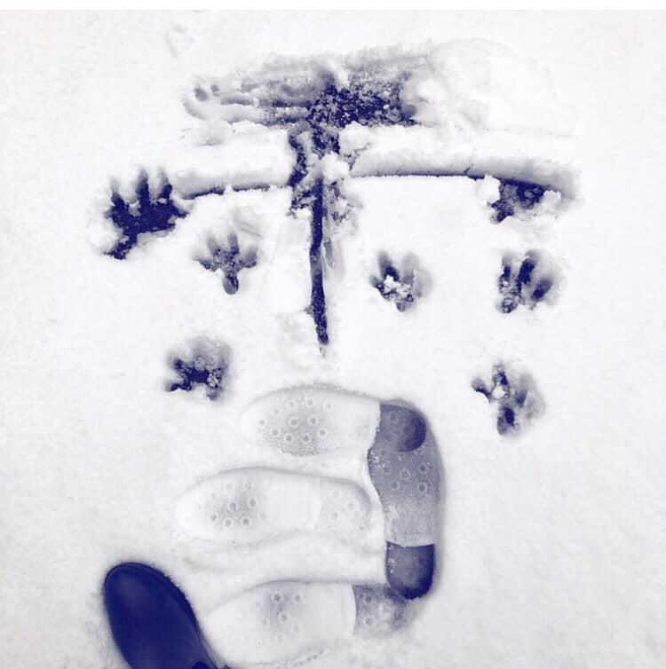 秋田の冬✨_e0197227_16412006.jpg