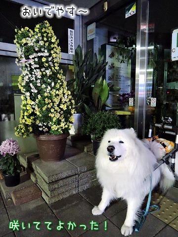 あの犬氏は_c0062832_12182667.jpg