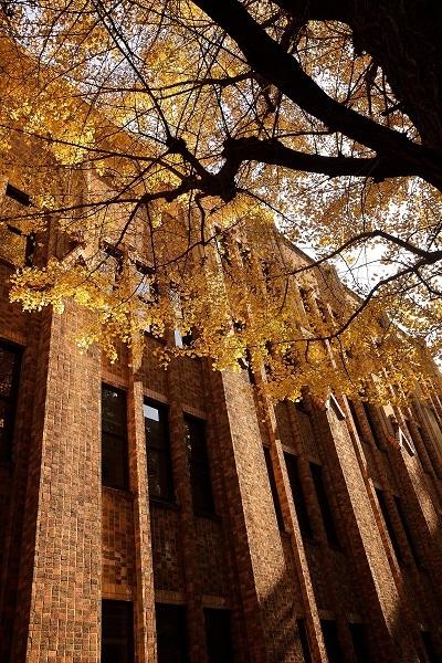 campus  東京大学_d0264733_11071351.jpg