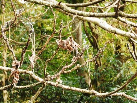 鳥たちの季節到来_a0123836_14454477.jpg