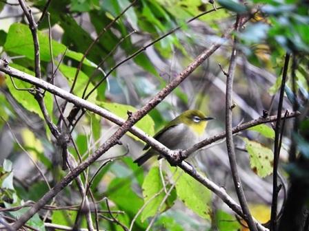 鳥たちの季節到来_a0123836_14460265.jpg