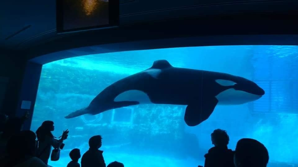 名古屋港水族館へ行ってきました♪_f0373339_15135925.jpg