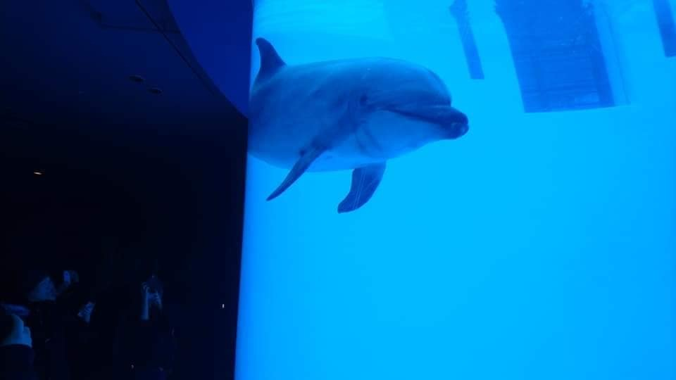 名古屋港水族館へ行ってきました♪_f0373339_15135940.jpg