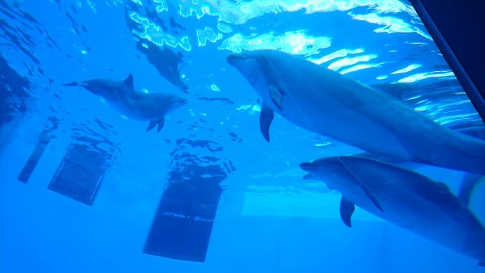 名古屋港水族館へ行ってきました♪_f0373339_15135953.jpg