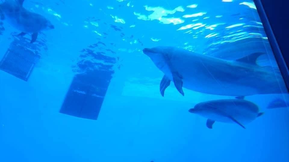 名古屋港水族館へ行ってきました♪_f0373339_15140071.jpg