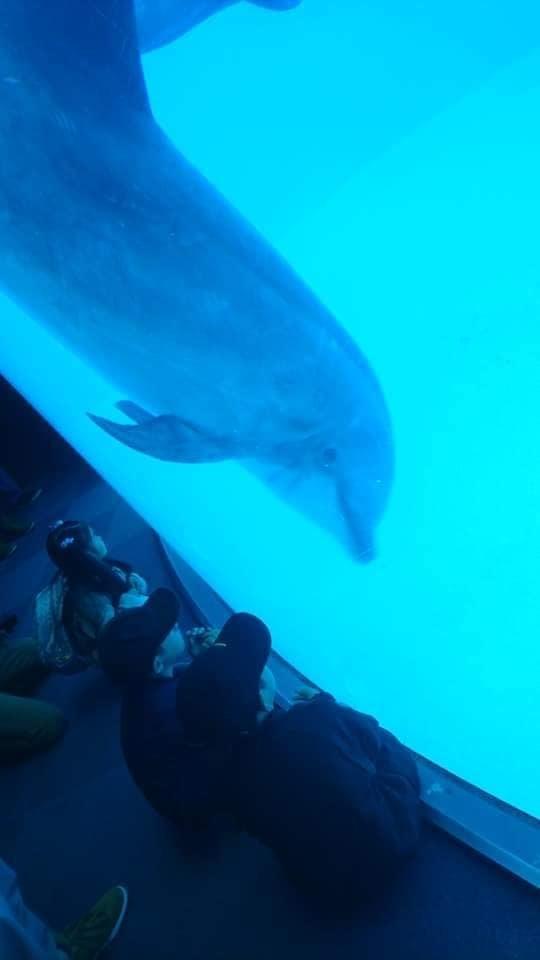 名古屋港水族館へ行ってきました♪_f0373339_15140089.jpg