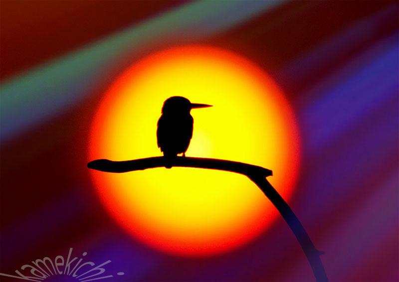 鳥さん達_a0057752_14541255.jpg
