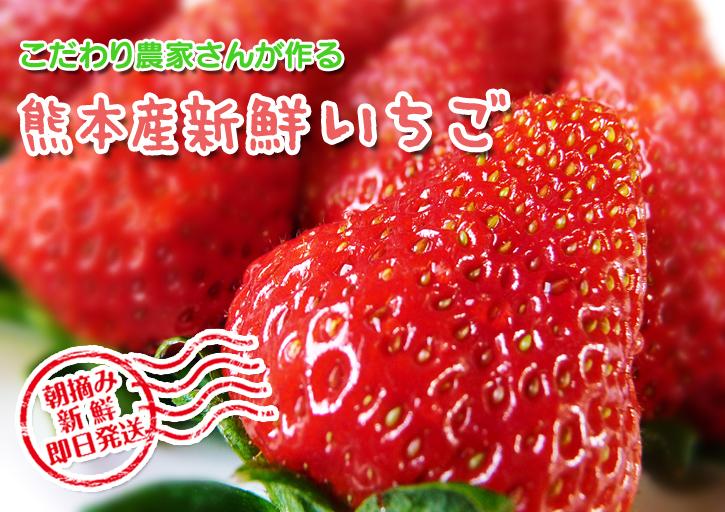 熊本産高級イチゴ『完熟紅ほっぺ』本日より発送開始!完熟の美味さ!朝採りの新鮮さ!大好評発売中!_a0254656_18164234.jpg