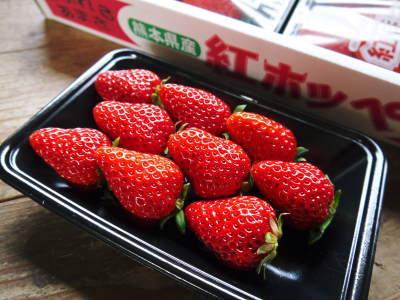 熊本産高級イチゴ『完熟紅ほっぺ』本日より発送開始!完熟の美味さ!朝採りの新鮮さ!大好評発売中!_a0254656_18242111.jpg