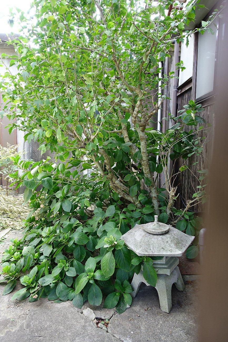 JR上山口駅周辺_c0112559_07553944.jpg