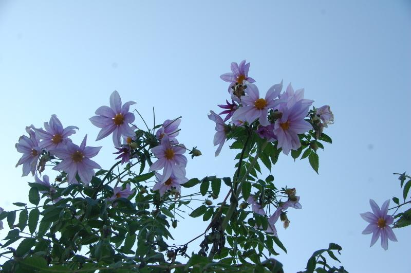 我が家の花壇のリニューアルは大仕事である_c0108460_17214755.jpg