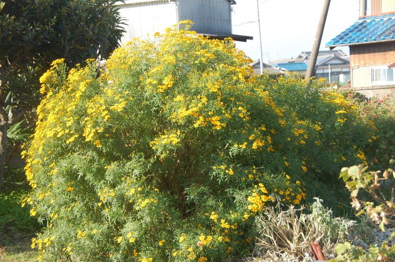 我が家の花壇のリニューアルは大仕事である_c0108460_17232449.jpg