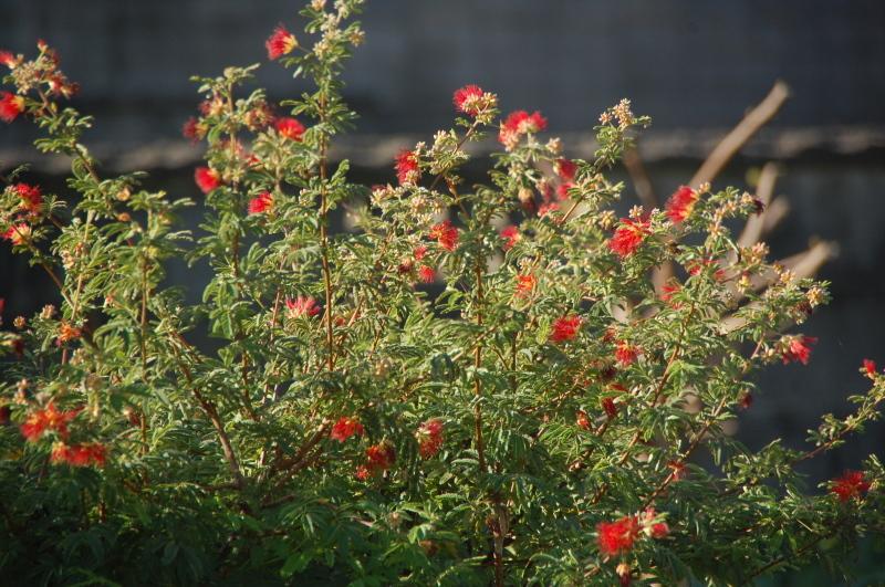 我が家の花壇のリニューアルは大仕事である_c0108460_17242198.jpg