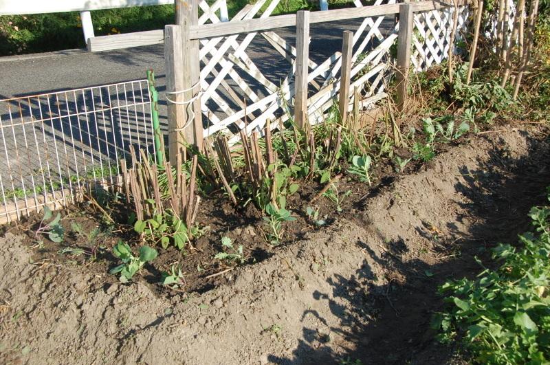 我が家の花壇のリニューアルは大仕事である_c0108460_17270751.jpg