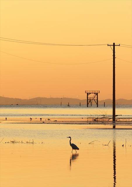 久津間海岸 1_f0018464_20552495.jpg