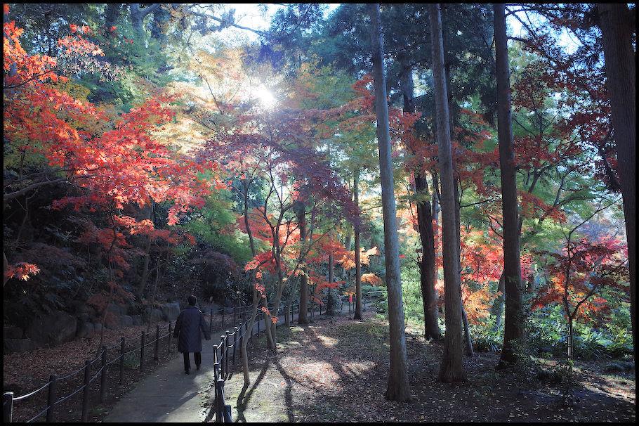 本土寺 -15_b0340572_15440759.jpg