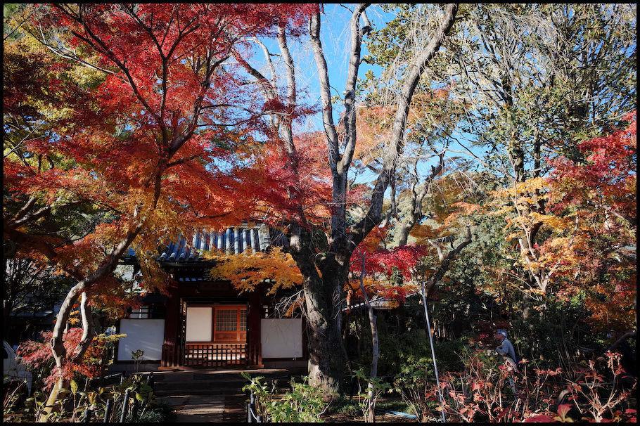 本土寺 -15_b0340572_15441894.jpg