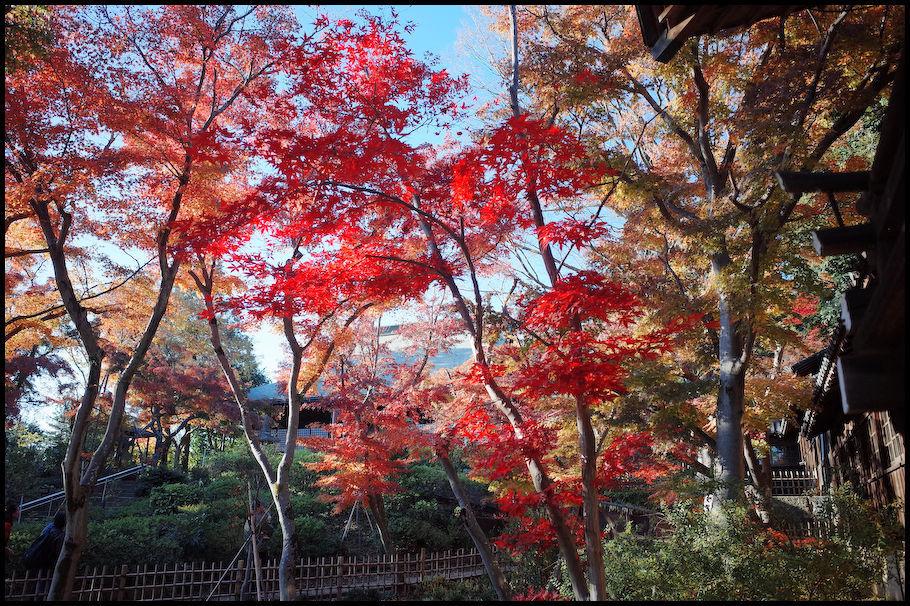 本土寺 -15_b0340572_15443603.jpg