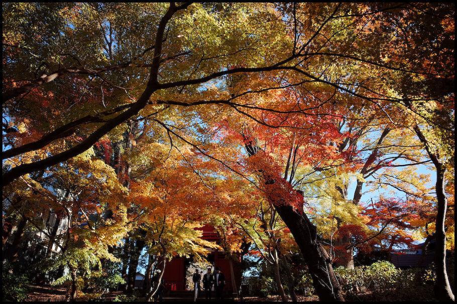 本土寺 -15_b0340572_15444817.jpg