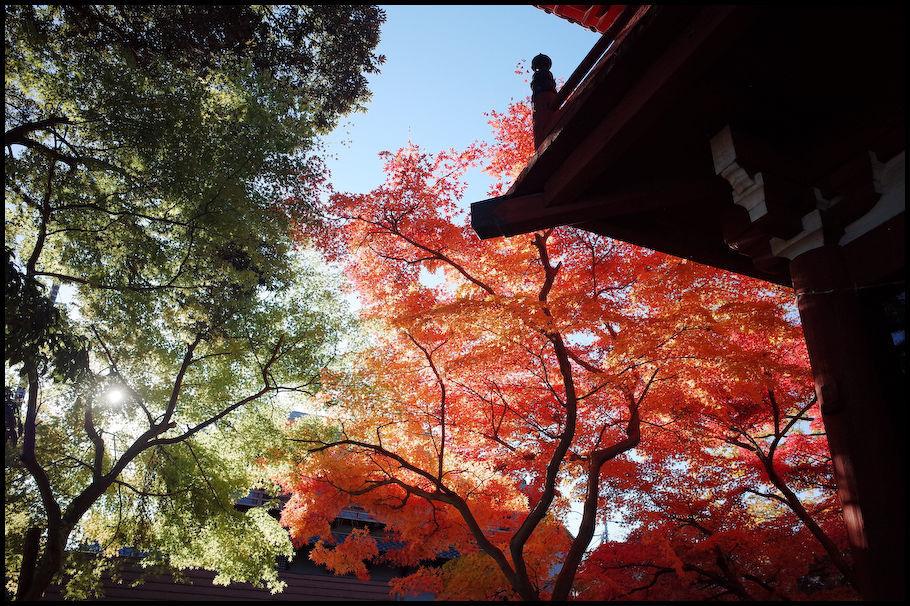 本土寺 -15_b0340572_15450320.jpg