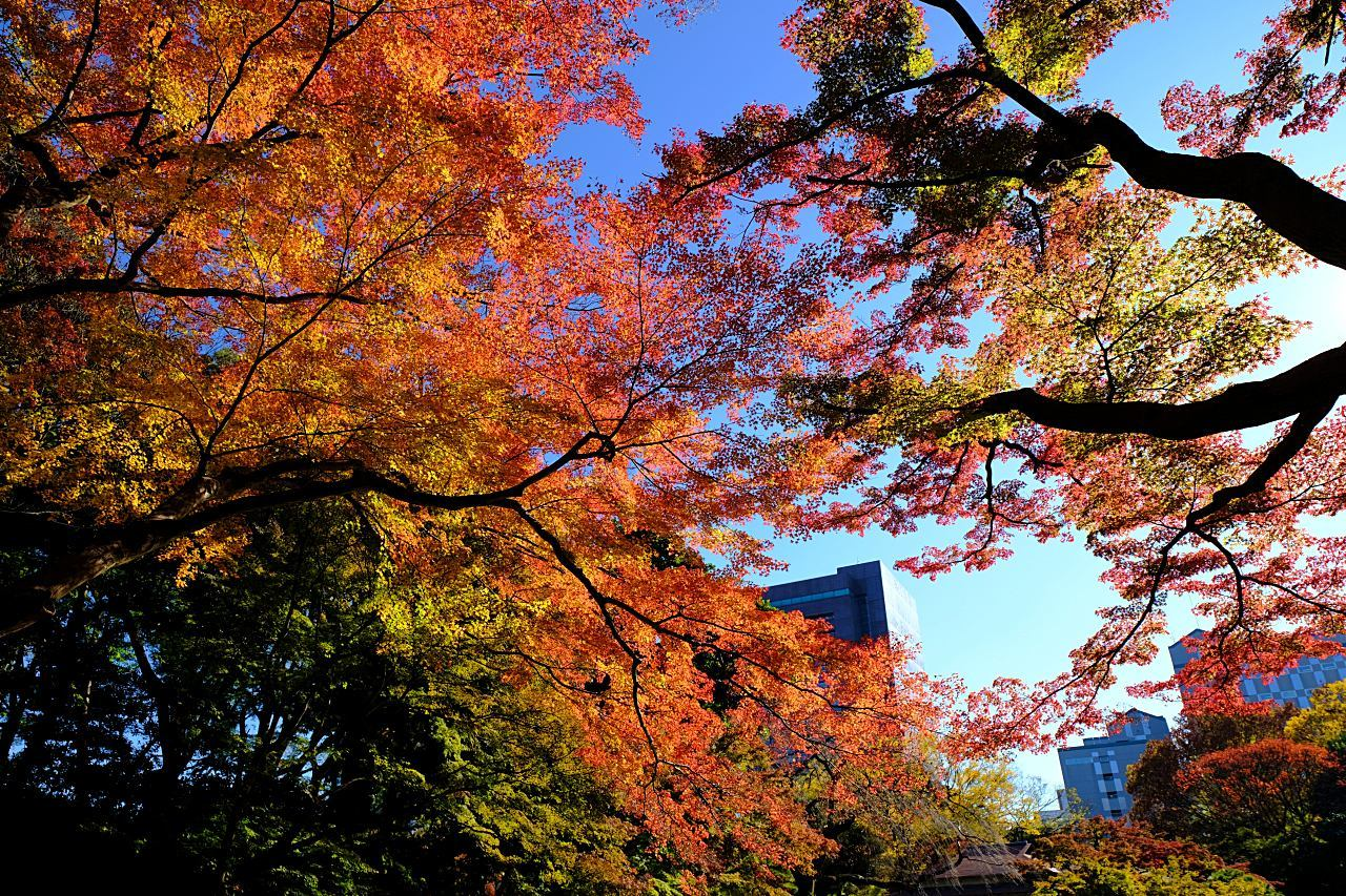 小石川後楽園の紅葉。_a0129474_20405811.jpg