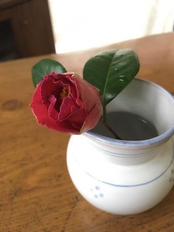 椿が咲いた_b0011075_16542459.jpg