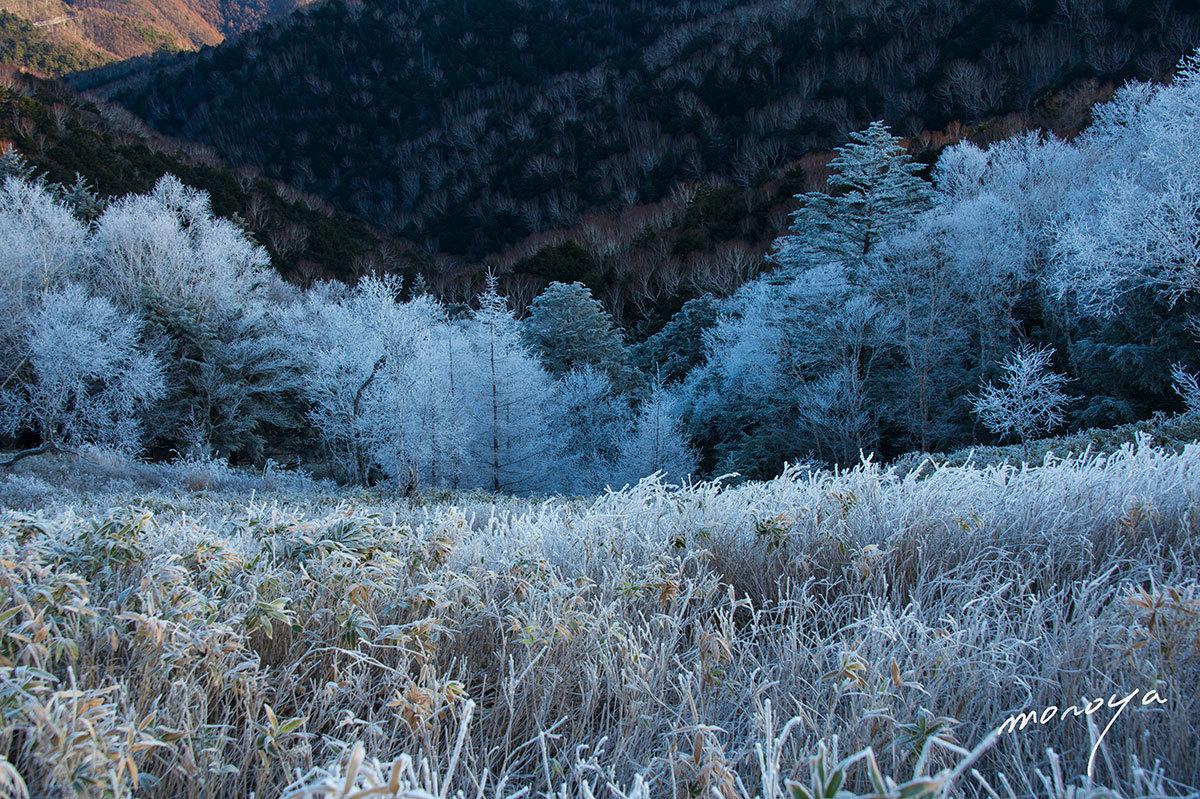 霧氷の高原_c0085877_06342187.jpg