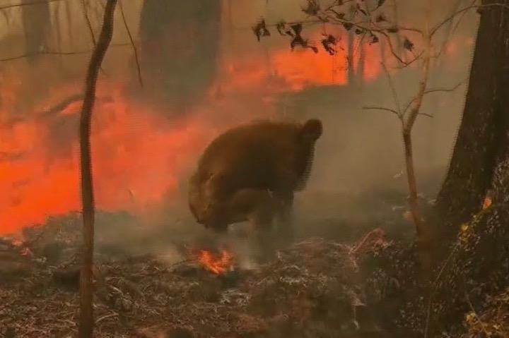 オーストラリアの山火事_c0217678_22151640.jpg